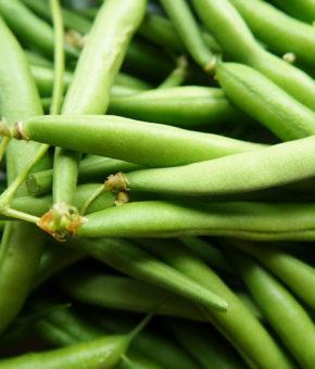 Beans (Bush)