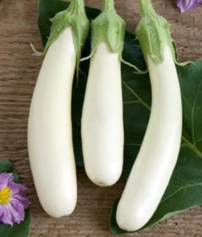 Brinjal White Long Seeds