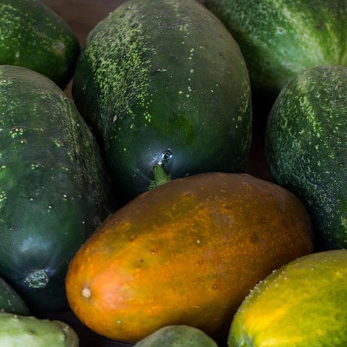 sambar-cucumbar