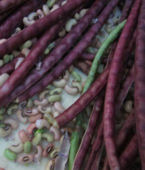 Cow Pea Red Gold