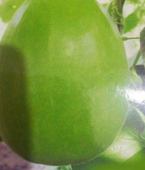 Round Gourd (Latu)