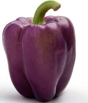 Capsicum Purple Bell